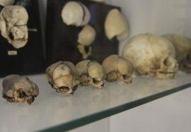 muzey-anatomii2
