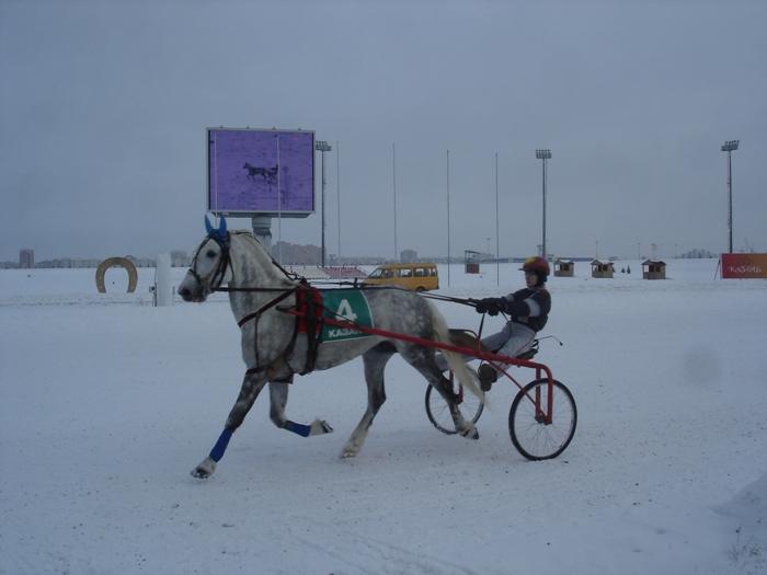 Посещение казанского ипподрома 2